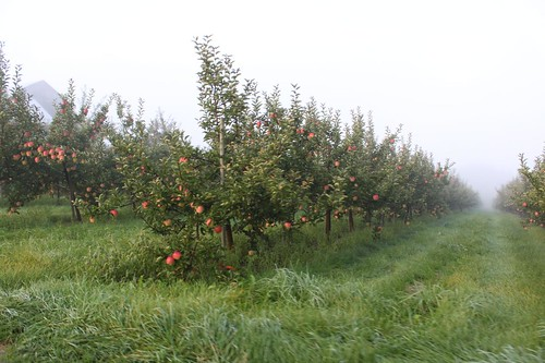 Wilmot Orchards