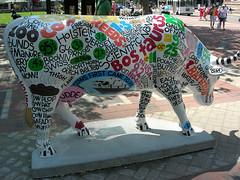 Comenclature Cow in Boston