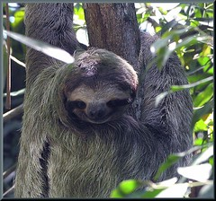 Costa Rica Vacation Sloth