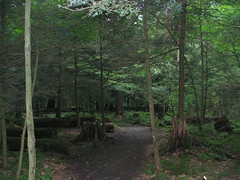 ANF_022_08202004