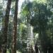 brunei-canopy-22