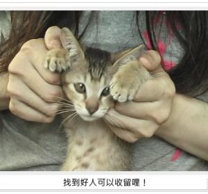 貓咪的告別