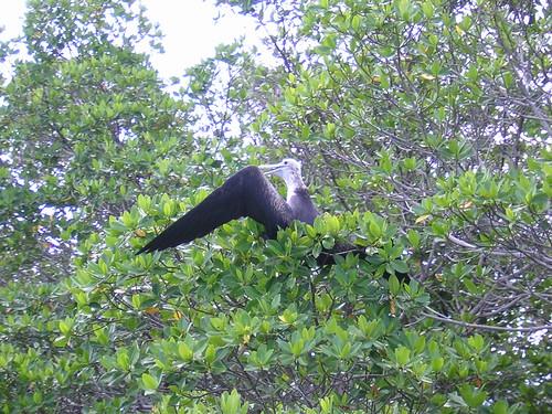 Bird Island - Close Up