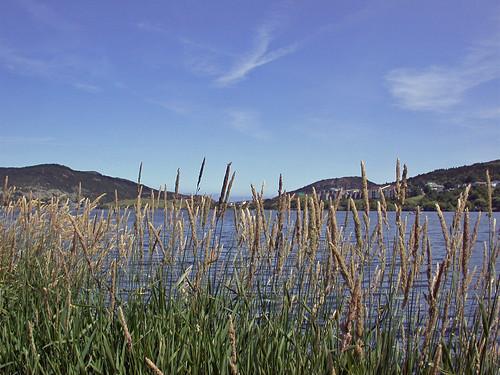 Quidi Vidi Lake