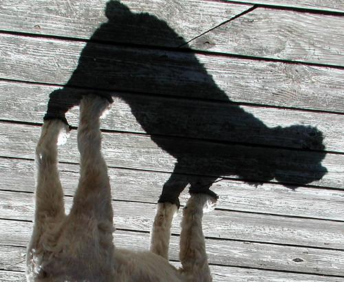 shadowdog