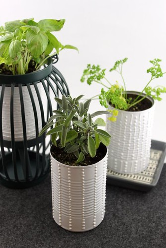 Soup Can Herb Garden