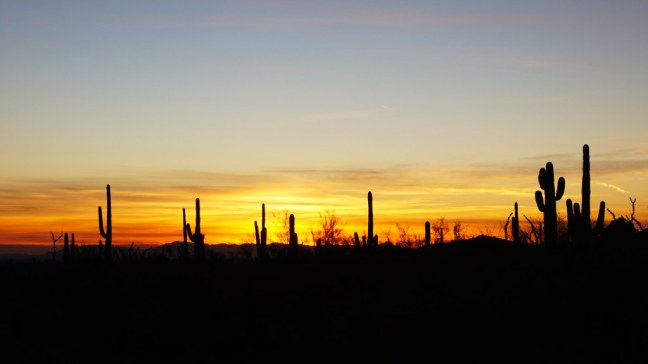 Sonoran Desert at sunset