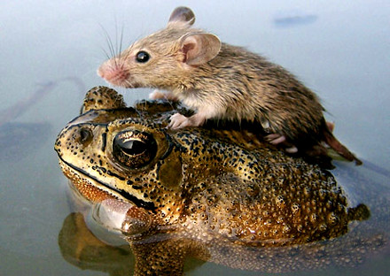 Frog and mouse