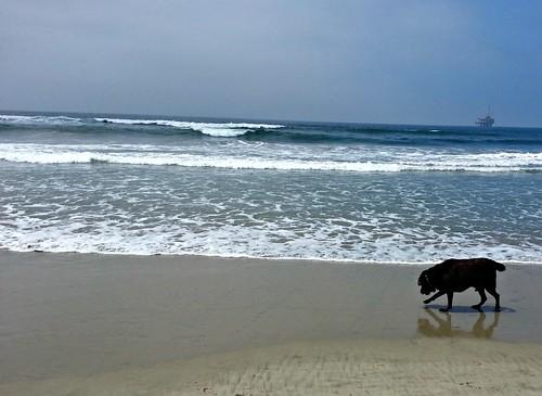 Doggie Beach_772013_10