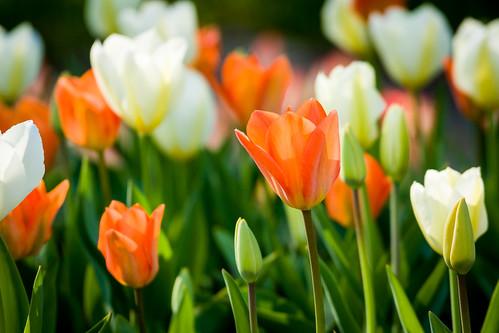 Pavasaris Kauno botanikos sode