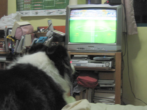 Cheering for the Socceroos...