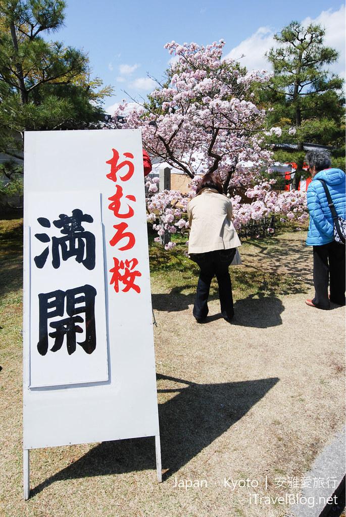 京都赏樱 仁合寺 御室樱_08