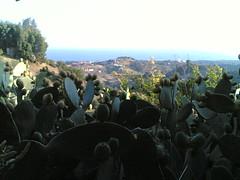 Chumberas en Marbella