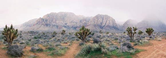 Joshua Trees in Red Rock Canyon Country