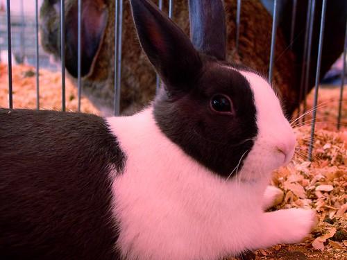 Bunnies Black And Whtie