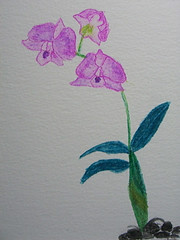 Orchids 3 - by Mrs RamblingLibrarian