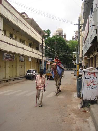 Camel in Charminar