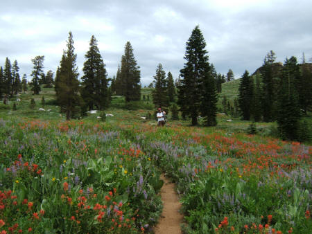Kirkwood Whiskey Trail Flowers