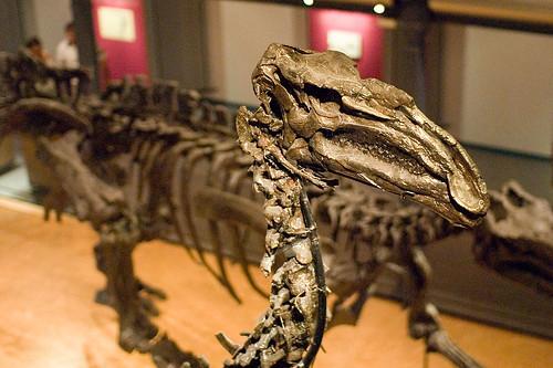 Iguanodon van Bernissart