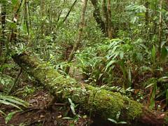 Bokor, el bosque húmedo