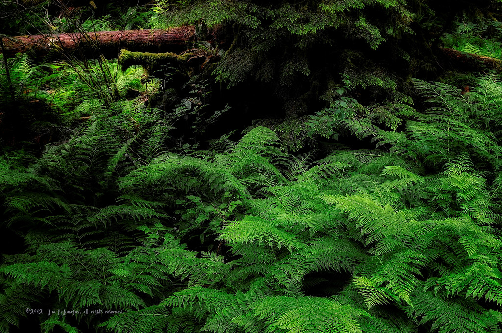 Floor Of Ferns