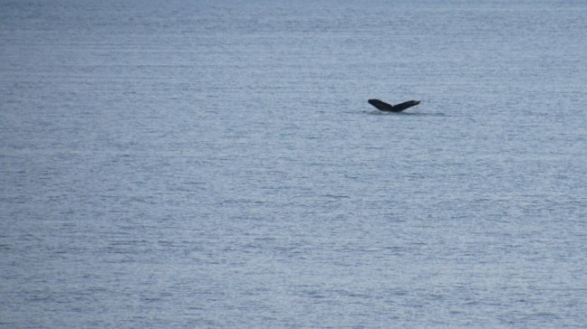 Whale's tail