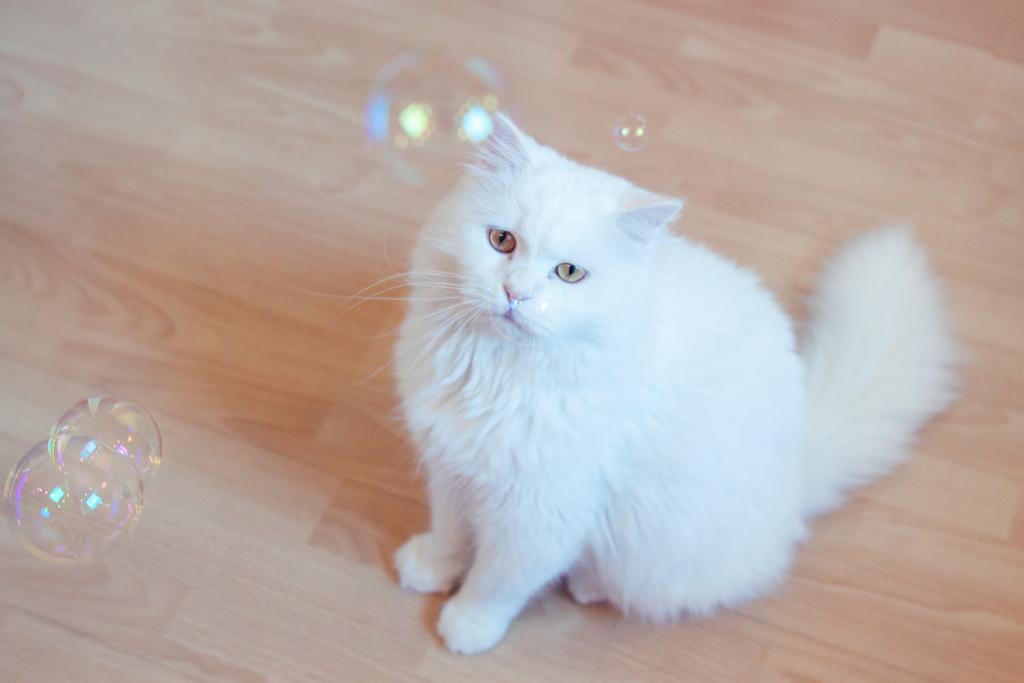 Bubbels 4