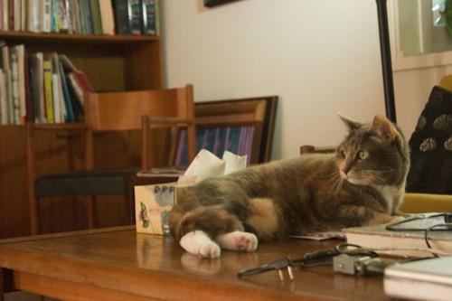 Chat sur la Table