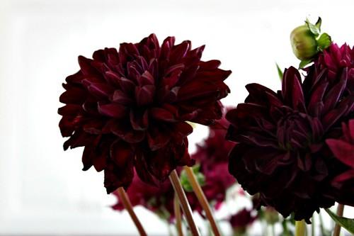 Trader Joes Flowers Mums_1