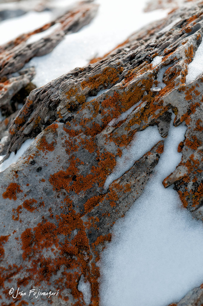 Lichen On Rock
