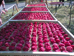 Umeboshi being dried