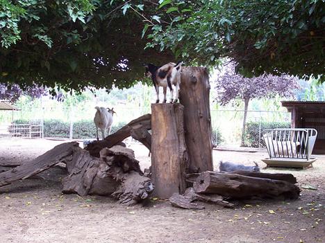 a goat-band photo?