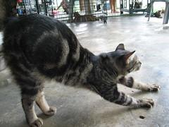 Izzy_stretch_20061014