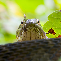 Same snake, different view