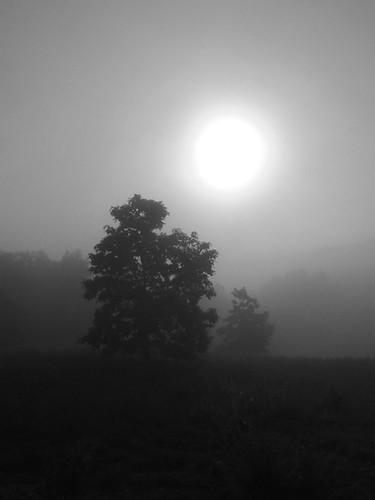 sun through fog (b&w )