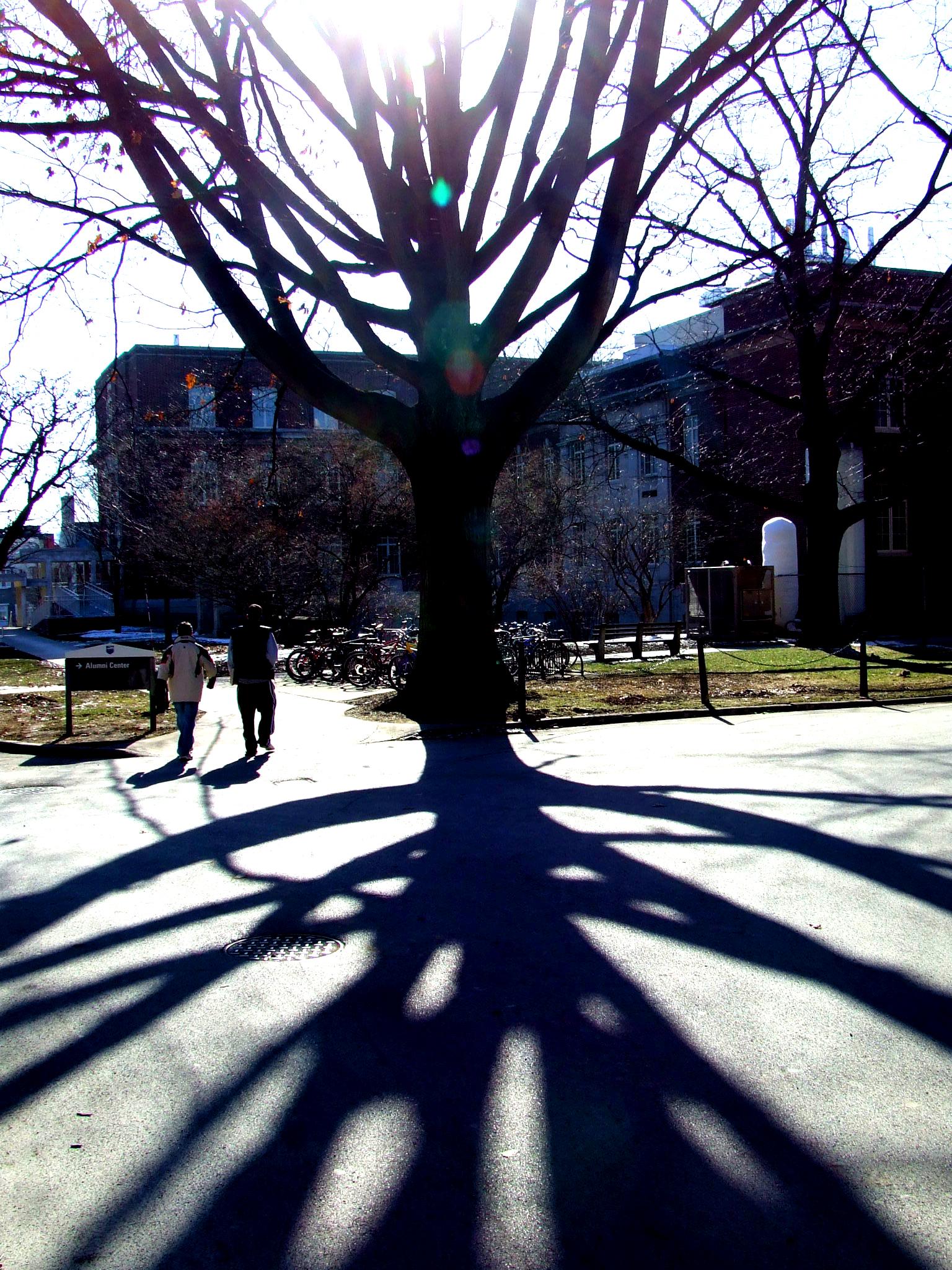 tree on University Park campus