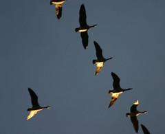 eveningflyers