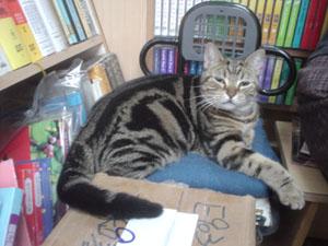 [喵] 書店的貓咪