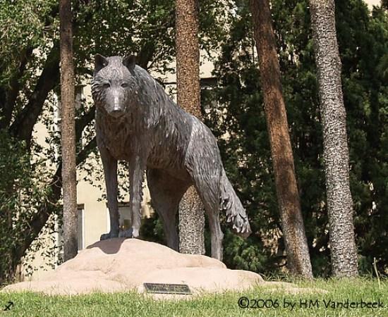 The Lobos