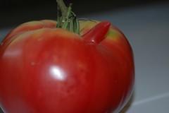 Tomato Two