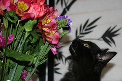 Kyoshi sniffing yellow and pink orchids