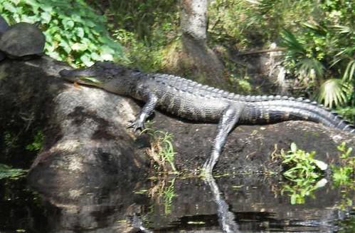 gator843