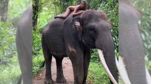 Instagram influencer who posed nude with an endangered elephant responds to critics: 'I love and respect animals'