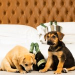 This hotel will deliver puppies and prosecco straight to your room 💥💥