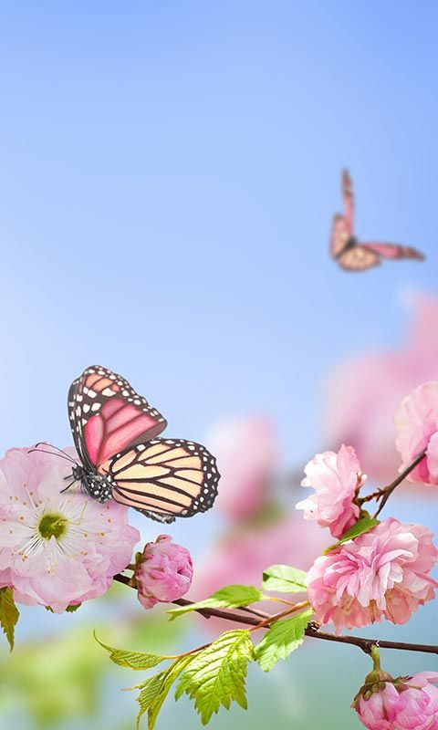 Butterflies 3d Live Wallpaper Apk Free Spring Flowers Wallpaper For Android Apk Download For