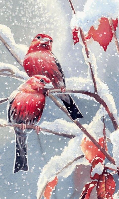 Snow Falling Live Wallpaper Download Free Snow Birds Live Wallpaper Apk Download For Android