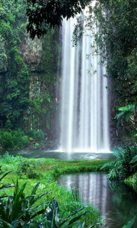 Rain Fall Hd Wallpaper Download Free Jungle Waterfall Live Wallpaper Apk Download For