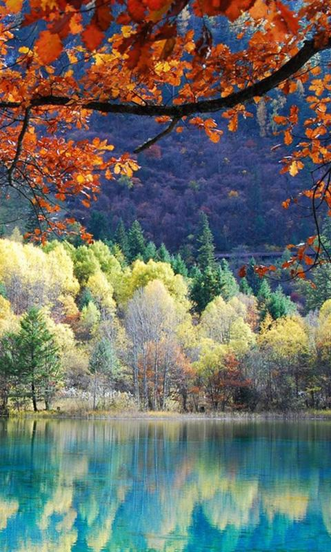 Free Fall Wallpaper Apps Free Best Nature Views Ever Wallpaper Apk Download For