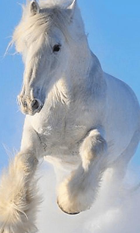 Cute Live Wallpaper App Free Horse Wallpapers App Apk Download For Android Getjar
