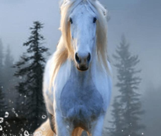 Horse Wallpapers App Screenshot 2 3
